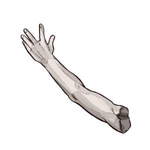 Anatomie lernen mit den Eselsbrücken von Meditricks.de